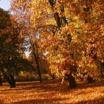Buďte fit i na podzim