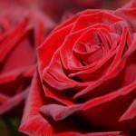 Neobvyklá vyznání lásky